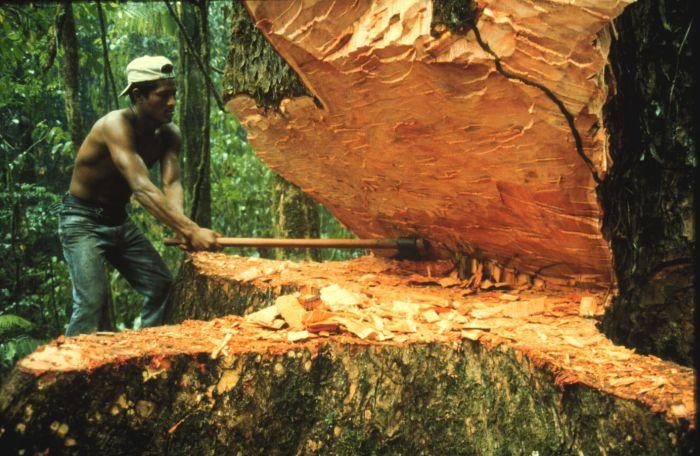 Doğal Ortam Değiştirilirken Doğaya Ne Gibi Zararlar Verdiğini Anlatan Bir Olay Yazınız