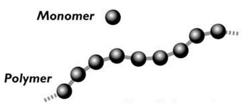 Monomer Hücrelerin Besin Maddelerini Kullanabilmesi İçin Besinler Hangi Hale Dönüşmelidir