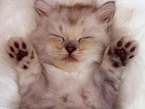 Kedilerin Kaç Tane Parmağı Vardır