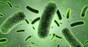 Protein, Yağ ve Karbonhidratların Yapıtaşları